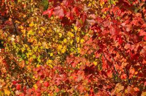Pallette of Autumn Colors