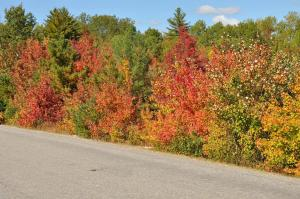 Roadside Autumn Leaves.