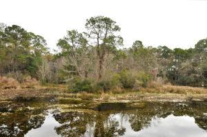 Visitors Center Pond