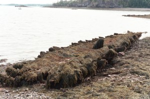 Keel and Ribs of Wooden-Hulled vessel exposed at low tide off Cony Beach.